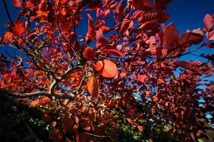 The beautiful colours of Edinburgh in autumn